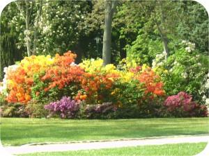 Nancy Pépinière Rhododendron
